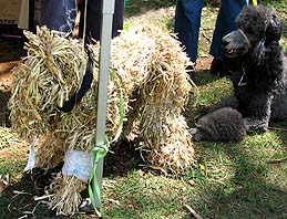 Another dog scarecrow