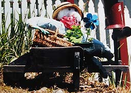 Scarecrow idea with a wheelbarrow